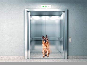 ¿Pueden subir los perros en el ascensor?